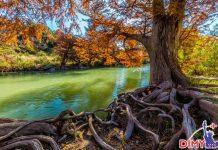 Cảnh đẹp Texas
